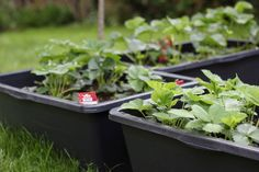 Hochbeet im Mörtelkasten anlegen Herbs, Mai, Flowers, Urban Gardening, Nature, Inspiration, Companion Planting, Home And Garden, Balcony