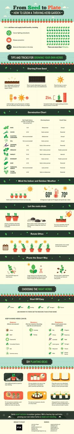 Getting ready for fall: Plant an indoor herb garden