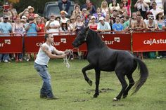 Asturian, Horse Breeds, Pony, Spain, Horses, Action, Summer, Events, Animales
