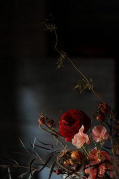 Flowers Black Background, Dark Flowers, Flower Background Wallpaper, Flower Phone Wallpaper, Flower Backgrounds, Wallpaper Nature Flowers, Flowery Wallpaper, Flowers Nature, Floral Photography
