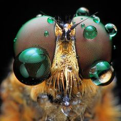 Incredible macro bug photos by Shikhei Goh.  @M Murphy you might like.