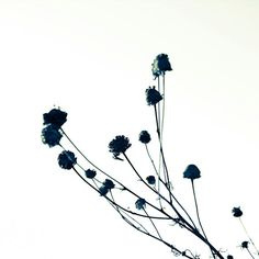 Schwarz und weiß-Naturfoto  Natur-Fotografie  von DUEALBERI auf Etsy