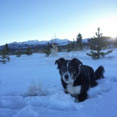 Sunset hike through the snow with my favorite doggy duo! #tundradog #willydog #goldhill #breck #colorado #breckenridge #coloradical #coloradodogs #mountaindogs #dogsofinstagram #adventurecrew #bordercollie #aussie #gsd #greatpyrenees #outdoorlife #outdoorwomen #getoutside #afterworkspecial