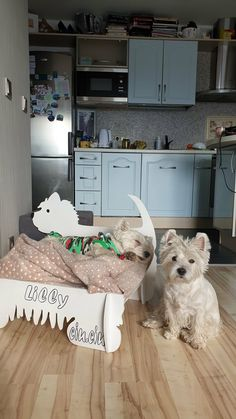 Two little sisters. When stories happen you understand how important is your important to your important ones. 𝗨𝗽𝗱𝗮𝘁𝗲 𝗼𝗻. Westie Puppies, Chihuahua Dogs, Westies, Sleeping A Lot, Animal Shelter, Shelter Dogs, Animal Rescue, Dog Raincoat, Funny Dog Memes