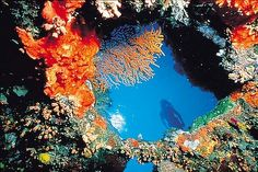 The spectacularly colourful underworld of Lizard Island on Queensland's Great Barrier Reef.