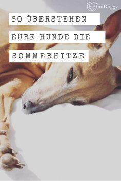 Die Wärme kommt bald wieder. Mit diesen tollen Tipps überstehen eure Hunde die Zeit optimal.