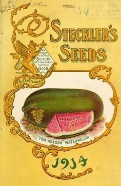 Find seeds today from Tom Watson Watermelon art from 100 years ago!