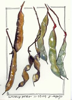 from my sketchbook - Lesson 2: Greens - Sketching & Watercolor: Journal Style ~ November 2014