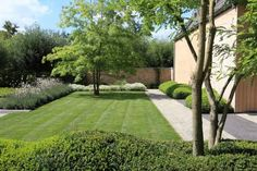 My client loves the softness of this garden the delicate planting on the left and the lone tree.