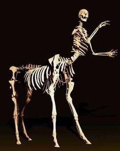 Shen Shaomin, Sagittarius, 2005: Bone, bone meal, glue. Credit: Eli Klein Fine Art, New York