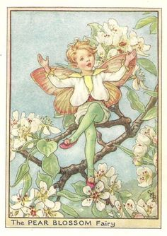 http://www.wellandantiquemaps.co.uk/lg_images/The-Pear-Blossom-Fairy.jpg
