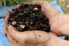 Does composting destroy weed seeds? We are regularly assured by composting experts that hot composting