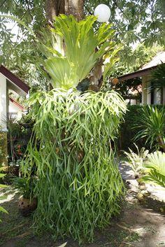 Bonsai e Samambaias - PlantaSonya - O seu blog sobre cultivo de plantas e flores