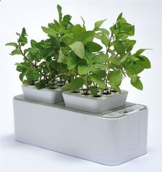 Hydroponic gardening has roots in ancient history. Six kinds of hydroponic gardening systems and planters include home aeroponics and tabletop aquaponics.