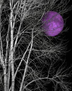 Black and White White Tree Purple Moon Wall by LittlePiePhotoArt