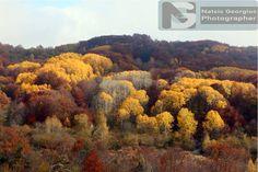 Φθινοπωρινά χρώματα στην ορεινή περιοχή Μακρυπλαγίου - Πολυκάρπου Δράμας 2016 (φωτογραφίες) - DRAMAnia.gr Drama 2016, Vineyard, Outdoor, Outdoors, Vine Yard, Vineyard Vines, Outdoor Games, The Great Outdoors