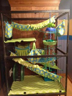 Cage Set Idea Fancy Rat, Fun Facts, Projects To Try, Cute Animals, Pet Products, Cage, Diy, Gatos, Furniture