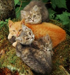 fall colored kittens :)