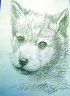 Drawing in pencil (A Dog)
