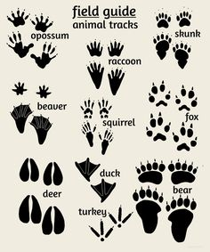 Woodland Nursery Art, Field Guide to Animal Tracks, Rustic Nursery|Children's Nursery Art | Alley Kids