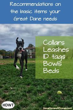 The basic items to have for your first Great Dane or your next Great Dane. Here are some recommendations of what my Danes have used, the good and bad. Great Dane Rescue, Great Dane Puppy, Rescue Dogs, Black Lab Puppies, Corgi Puppies, Dog Grooming Business, Dog Silhouette, Dog Travel, Collar And Leash