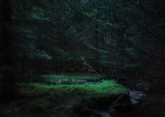 Sometimes the forest is unwelcoming at night.