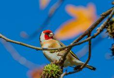 The Locals  #Birds #Wildlife