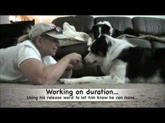 Head Down, Dog Trick...  How to train the head down trick...Pam's Dog Academy www.pamsdogtraining.com Pamela Johnson, San Diego CA Dog Tricks and Dog Training too!