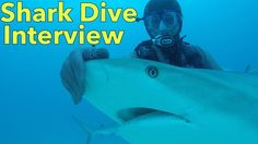 Learn about diving with sharks from the Reef Oasis Dive Club.