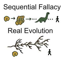 Essay biology evolution