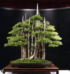 Bonsai Forest✖️More Pins Like This One At FOSTERGINGER @ Pinterest✖️