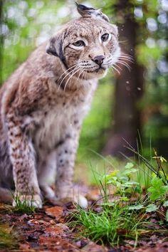 Animal Lovers– Сообщество– Google+