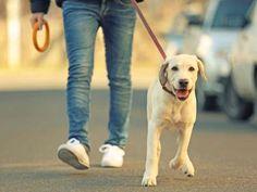 Uma das atividades mais recomendadas é passear com o cachorro. Caminhar faz bem para a saúde, ajuda ... - Foto: Shutterstock