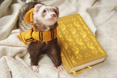 Find images and videos about harry potter, hogwarts and hp on We Heart It - the app to get lost in what you love. Theme Harry Potter, Harry Potter Aesthetic, Cute Funny Animals, Cute Baby Animals, Pet Ferret, Cute Ferrets, Ravenclaw, Hufflepuff Pride, Mellow Yellow