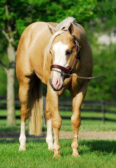 Exquisite Zippo      (Zippo Jack Bar x Exquisite Iron)      2002 15.2h Palomino AQHA Stallion