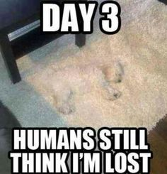 funny+dog+pictures+with+quotes | This is very cute camouflage Dog | funny way of life | funniest jokes ...