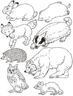 """for Jan Brett's """"Mitten"""" - put the animals in the mitten by brandy"""