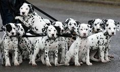 I hope these are not going to Cruella de Vil