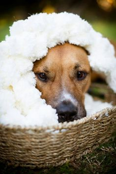 Dog Photography Prop Blanket. 'Marshmallow' Texture Rug for Pet Portraits and Dog Portraits on Etsy, $145.00