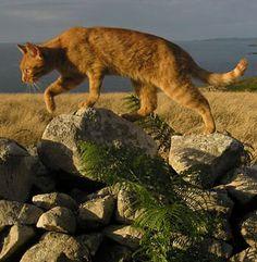 42 best firestar images  warrior cats warrior cats books