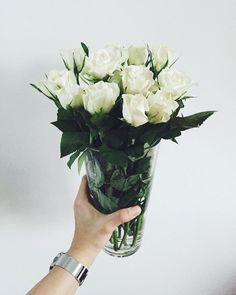 My lovely roses