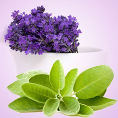 Lavender Sage Fragrance Oil | Natures Garden Fragrance Oils #lavenderscent #sagescent