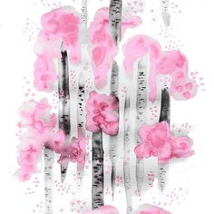 Björkar rosa