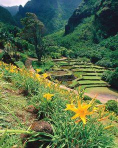 Love the terraced hills! Kaui, Hawaii