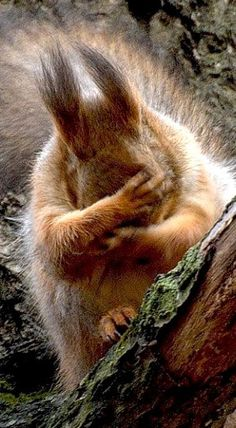 Yep, it's one of those days. Love this Squirrel! Beautiful animal photography, t… Yep, it's one of those days. Love this Squirrel! Beautiful animal photography, too. Animals And Pets, Baby Animals, Funny Animals, Cute Animals, Wild Animals, Animals Images, Beautiful Creatures, Animals Beautiful, Cute Squirrel