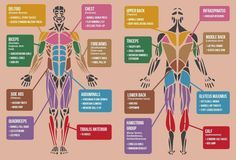 best exercises targeting each muscle group - Google Search