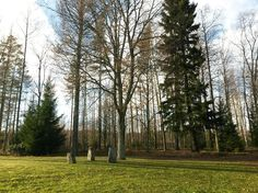Koivikon Katveessa: Todella aikainen kevät