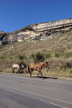 Free State, My Land, Africa Travel, Highlands, Golden Gate, Continents, Amazing Places, Equestrian, South Africa