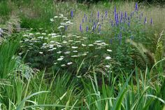 Natural planting round bog garden