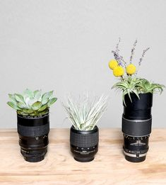 Vintage Cameras Vintage Camera Lens Planters, Set of 3 by Lindsey Rickert Photography on Scoutmob - Camera Decor, Camera Art, Camera Hacks, Camera Lens, Old Cameras, Vintage Cameras, Photographers Office, Interior Design Pictures, Pots